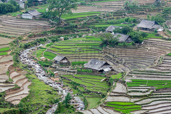 Elevated View of Rice Paddies in the Sapa Valley
