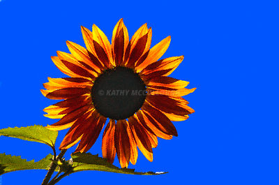 sunflower artistic