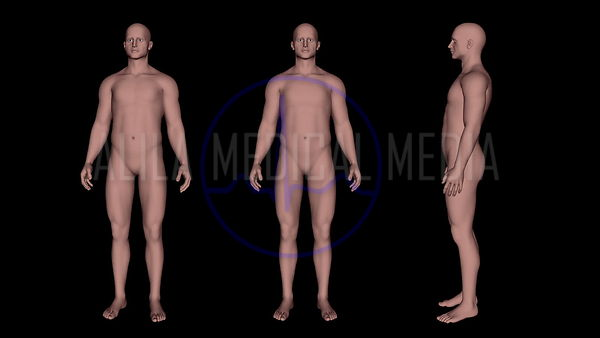 General Anatomy and Body Shape Videos