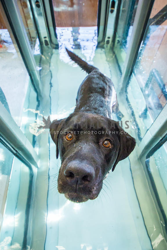 dog walking in hydrotherapy tank