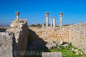 House of Flavius Germanus, Volubilis, Morocco; Landscape