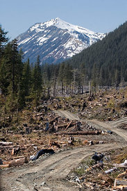 Clearcut logging of old-growth forest in the Chugach National Forest, Cape Yakitaga, Lost Coast, Alaska