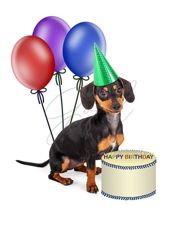 Dachshund Puppy Birthday Party
