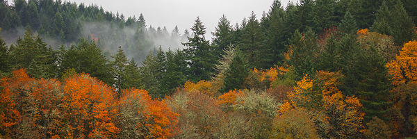 Youngberg_Hill_Oregon-0048
