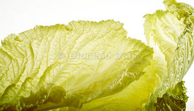 Chard leaf on white background