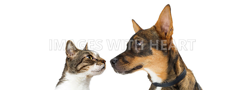 Dog and Cat Looking At Each Other Banner