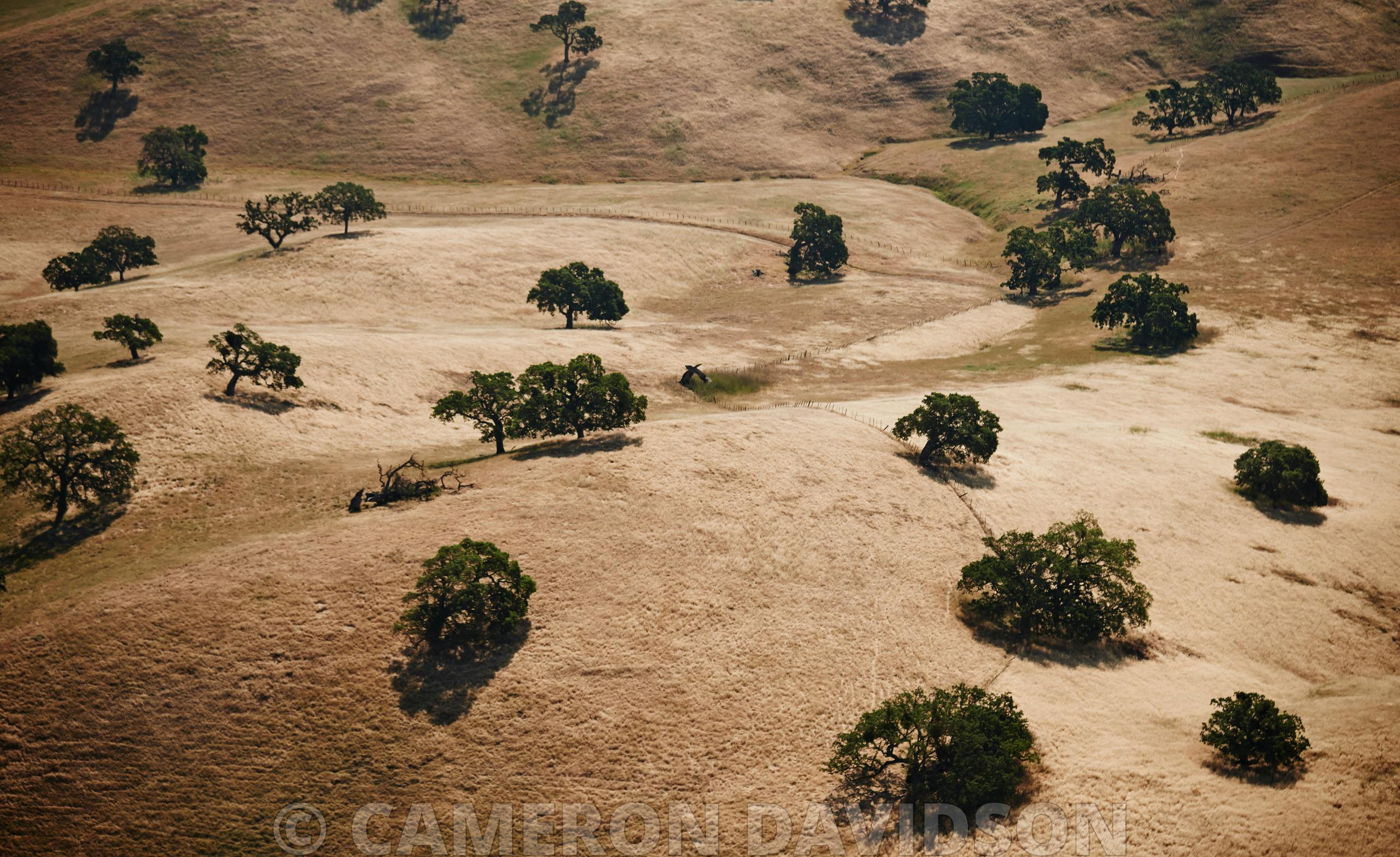 Aerial California, Trees