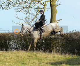 Amy Bryan-Dowell jumping a hedge near Ladywood - The Cottesmore at Priory Farm