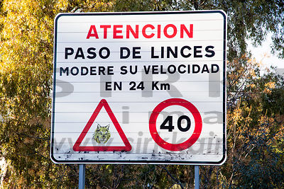 Traffic sign is  warning about Iberian Lynxes