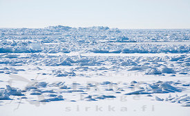 Pack Ice in the Front of Island Säppi