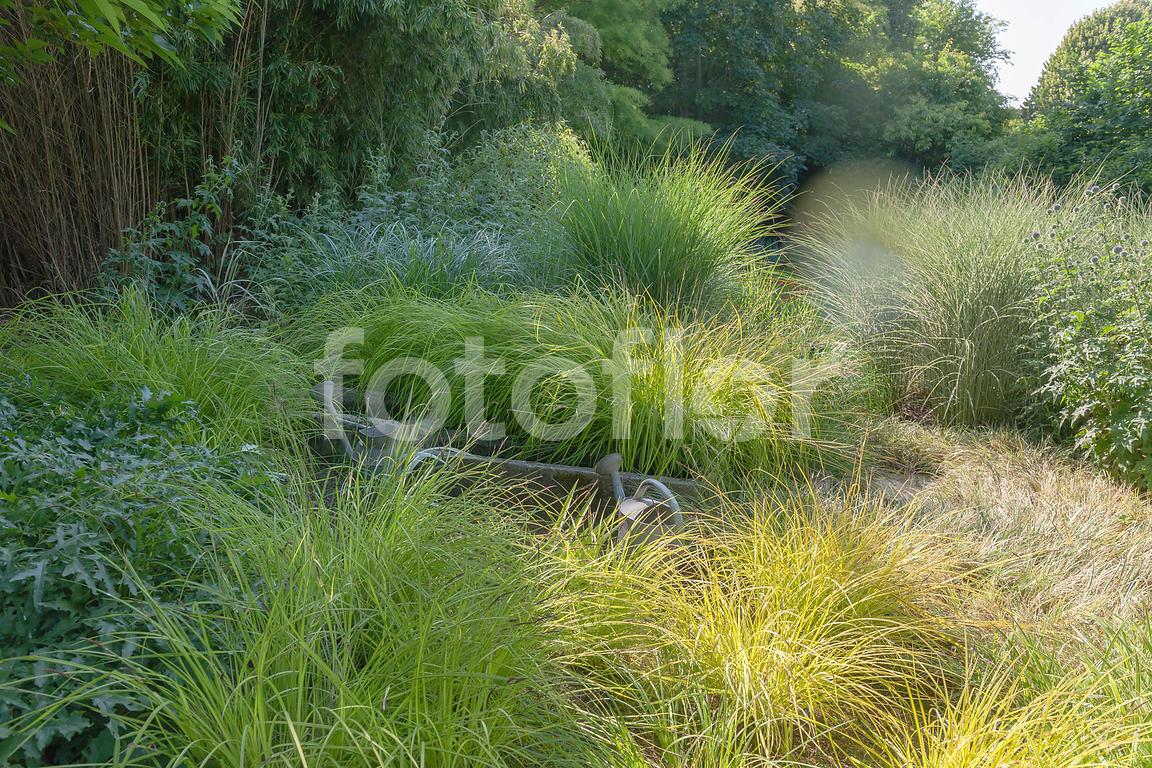Les Plus Belles Graminées photo de scène de jardin de graminées,ambiance graminées