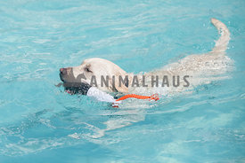 white dog swimming with water toy