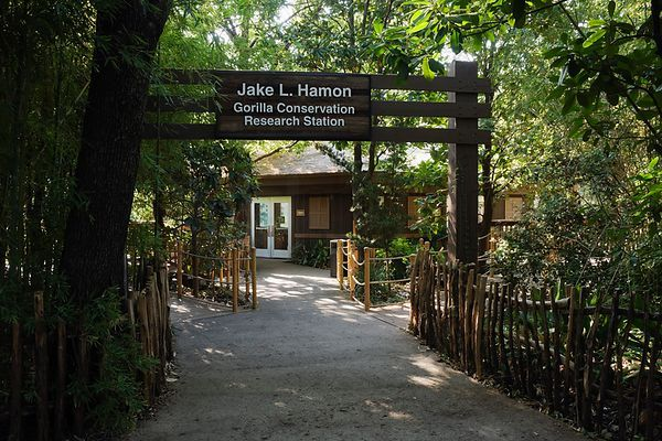 Jake L Hamon Gorilla Conservation Research Station