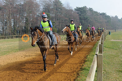 Racehorses canter on the Warren Hill gallops in the fog, Newmarket, Suffolk