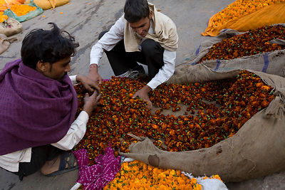 India - Rajasthan - Men sorting flowers at the Jantar market
