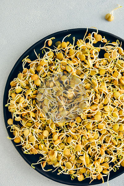 Sprouted lentils on a black plate