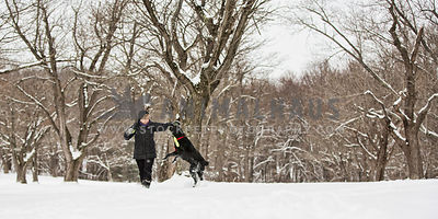 black lab playing with owner in snow
