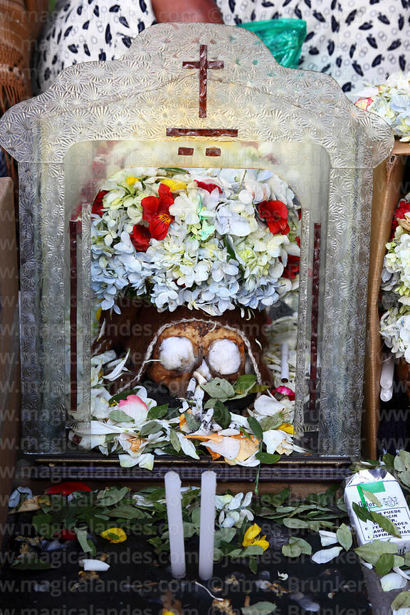 Skull with offerings of coca leaves (Erythroxylum coca) and candles, Ñatitas festival, La Paz, Bolivia