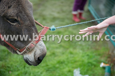 19th August, 2015.The 74th Virginia Agricultural Show, Virginia, County Cavan. Pictured is Amy Farrelly from Cavan trying to ...