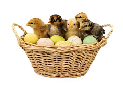 Basket of Baby Chicks and Easter Eggs