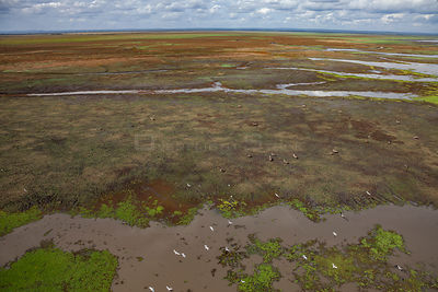 Aerial view of the edge of Lake Urema, Gorongosa National Park, Mozambique.  June 2016