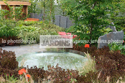Bush, Contemporary garden, Crimson, Evergreen, Pool, Purple, Stone, Digital