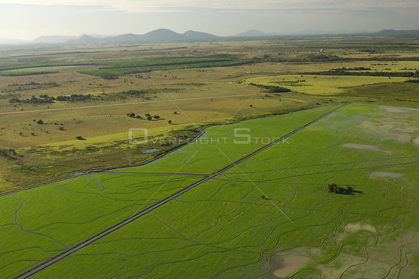 Aerial view of Rice plantation on the margin of Branco River, near Boa Vista city, Roraima State, Northern Brazil.