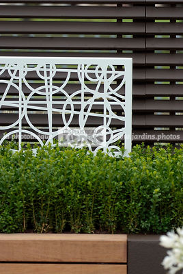 Buxus, Contemporary garden, Iron, Low hedge, Trellis, Common Box, Digital