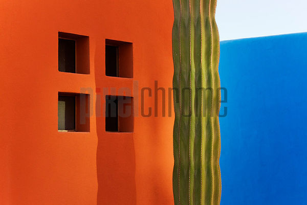 Colorful Walls and Cactus