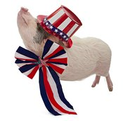 Pig Dressed for Fourth of July