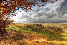 Autumn View - North Yorkshire