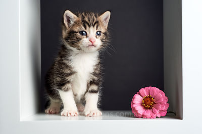 Kitten in studio with flower