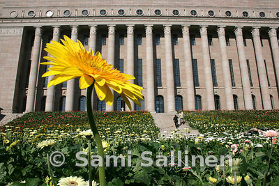 Parliament flowers 2