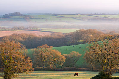 Misty spring dawn over farmlands in South Tawton, Devon, England, UK. April 2015.