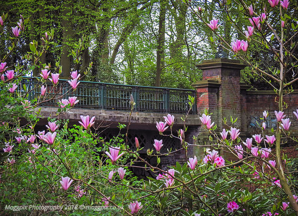 The Blooming Bridge