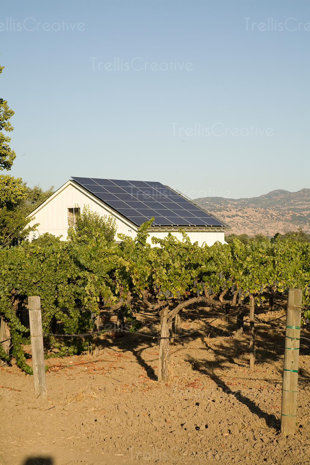 White barn harvests the sun to power the vineyard machinery