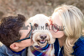 Doodle Dog Kissed by Couple
