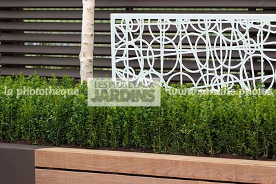 Bush, Buxus, Contemporary garden, Evergreen, Low hedge, Common Box, Digital