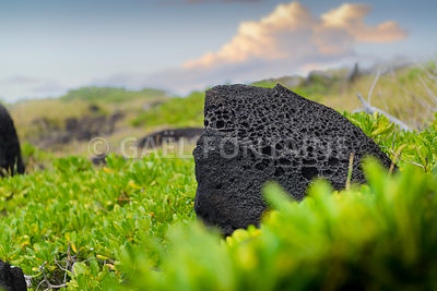 Typical volcanic rock in nature, Reunion Island