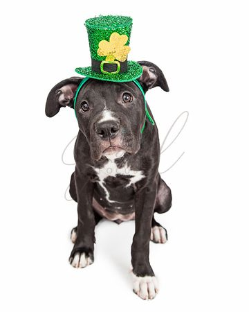 Irish Celebration Puppy Dog