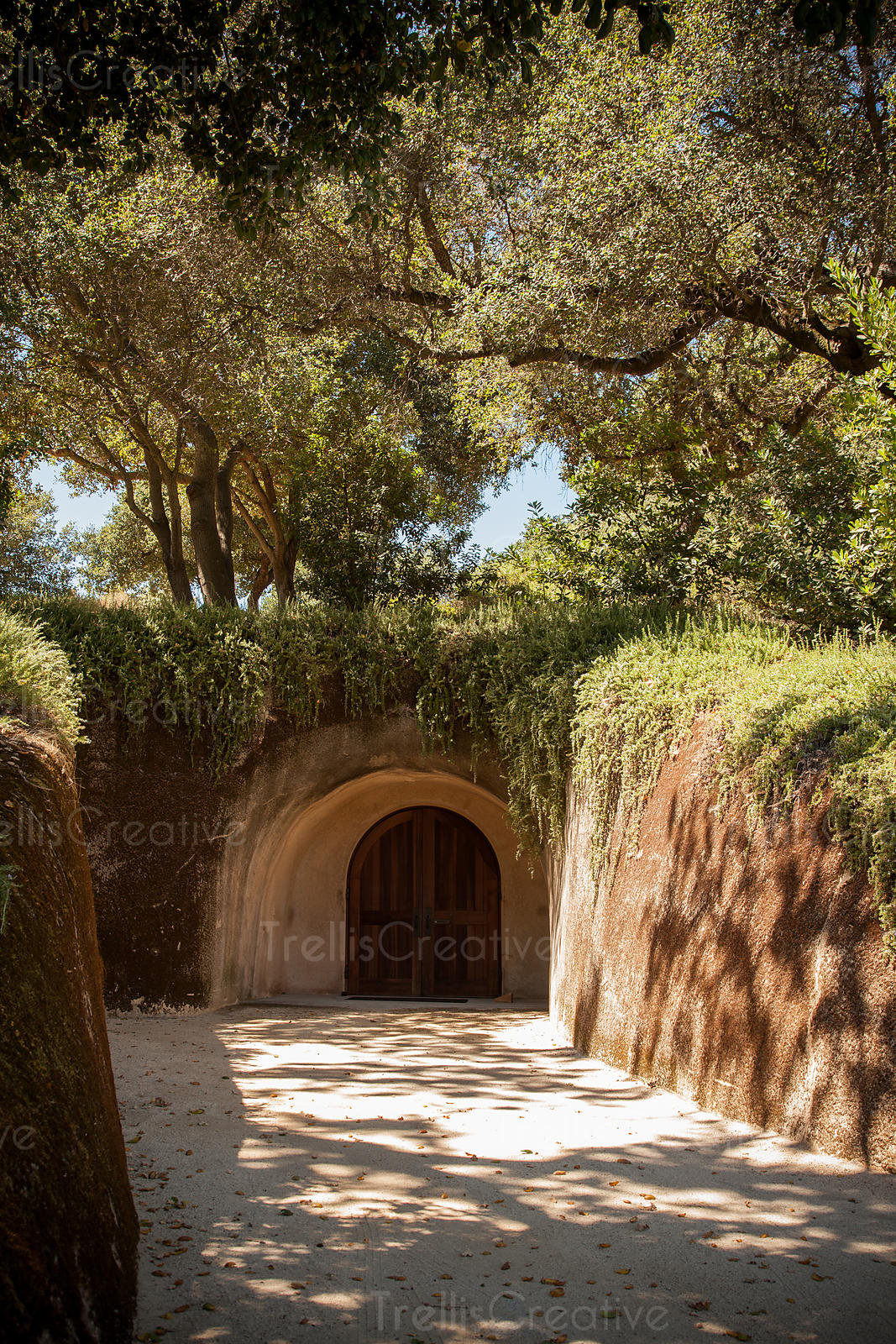 A hidden Napa Valley wine cave entrance covered by trees