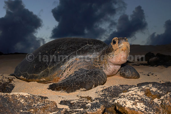 Ascension Island photos