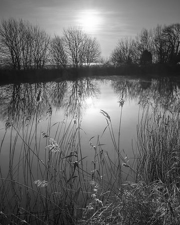 Trees and reeds in hazy winter sun on the Exeter Canal, Exeter, Devon, UK