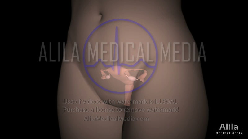 Female organs with labels, 3D animation.