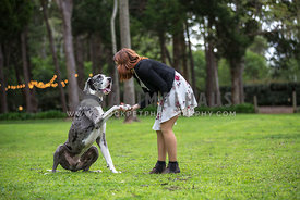 Girl and her Great Dane  shake hands