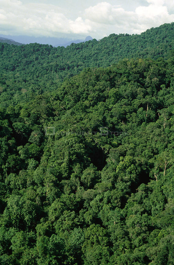 Aerial view of lowland tropical rainforest, Irian Jaya / West Papua, Papua New Guinea, 1991