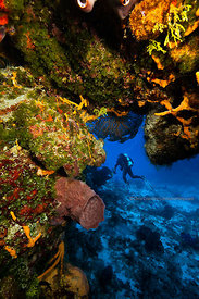 Underwater scenes on Columbia divesite, Cozumel, Mexico