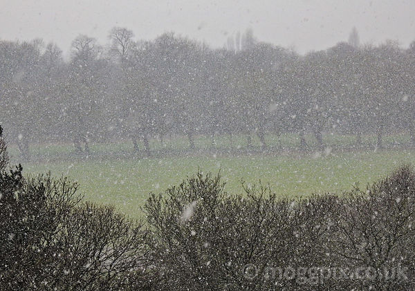 Snow upon the Field of Sefton