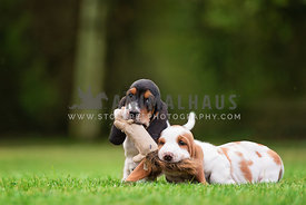two puppies playing with soft toy