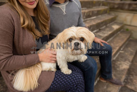 dog sitting on lap of couple